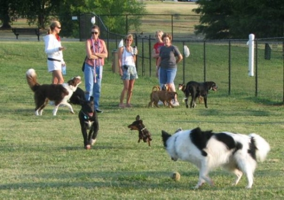 hunter park dog park