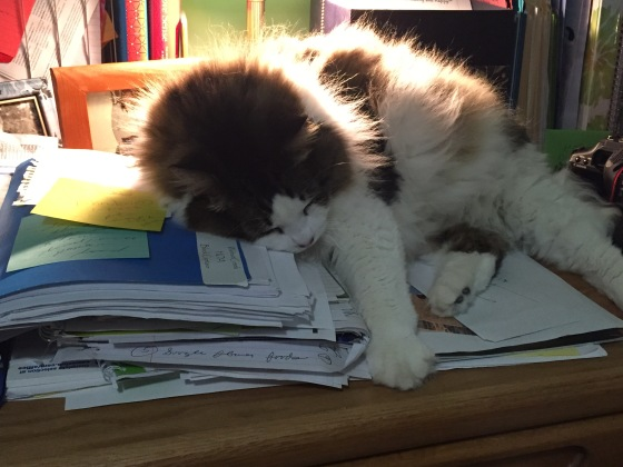 Cat resting on top of my desk papers