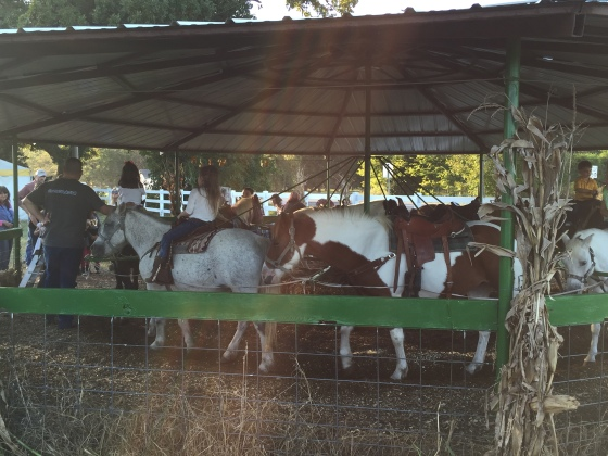 pony carosel with real ponies at pumpkin patch